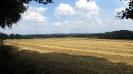 Landschaft 17